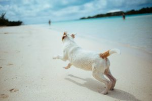 5 Tips for Travelling Safely with Pets This Christmas